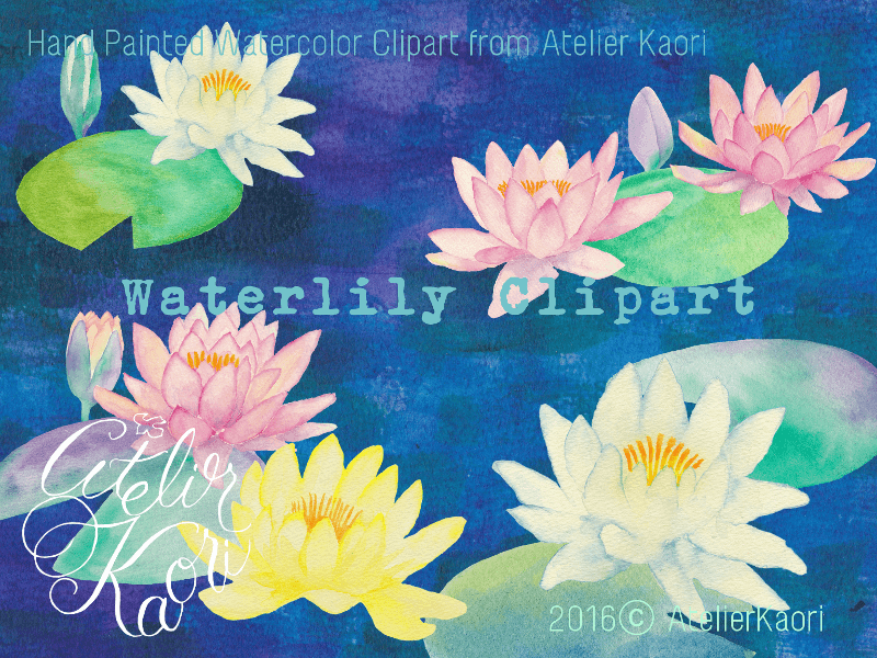 waterlily clipart
