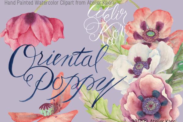 oriental poppy clipart